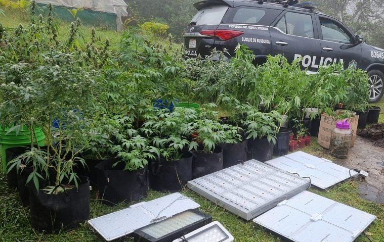 Cultivaron marihuana en macetas;  la acusación recayó en ellos y fue confiscada