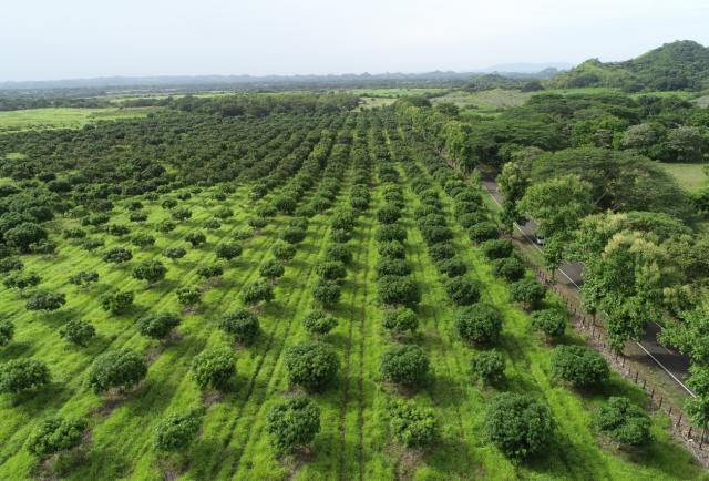 La pandemia contribuyó a la regeneración de nuevos bosques secundarios