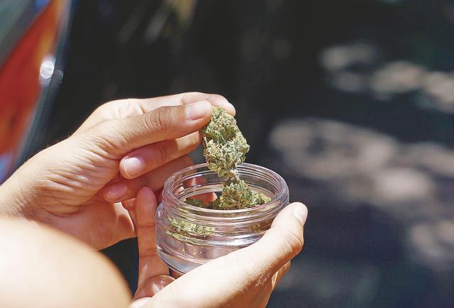 Cannabis, de hierba prohibida a uso medicinal