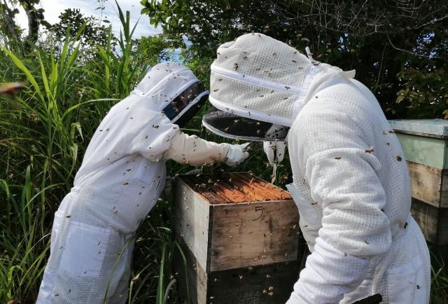 El arte de la apicultura perfilado en Olá